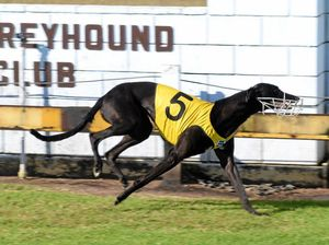 Dogs return to racing today