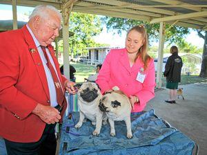 Snug as a pug on a rug: Why farmer Bill loves his dog