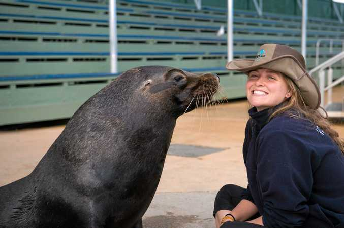 """GOOD MATES: While it's a """"hands-off"""" approach for rescued seals, DMM's Rocky enjoys a chat with his new buddy, marine team intern Rachel Lachinski."""