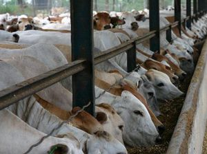 LETTER: Live cattle exports horrific for livestock