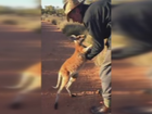 Young Roo at The Kangaroo Sanctuary finds saying goodbye difficult.