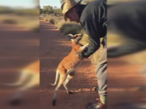 Cute Roo finds it hard to let go