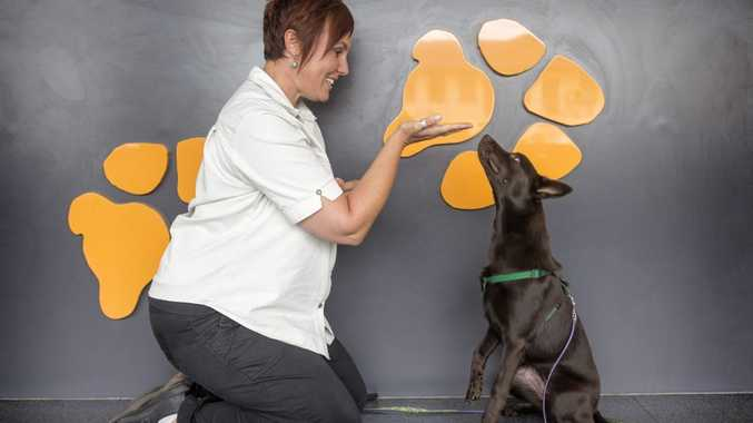 Kate Joseph and her kelpie Eden at work at the Riverbank Animal Hospital. Kate says there are benefits for animals, their owners and business productivity in having a dog at work.