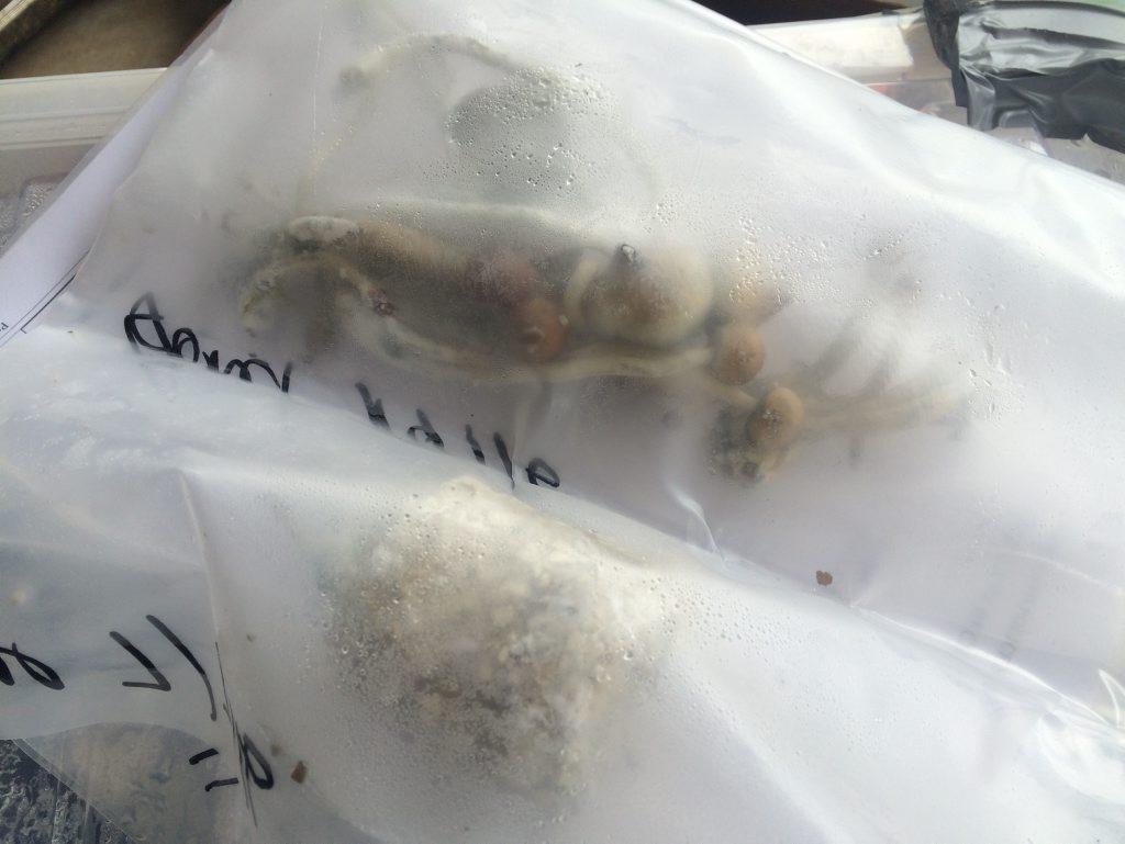Magic mushrooms seized as part of Operation Oscar Glyph.