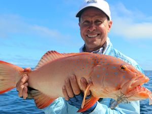 Cold triggers winter species in Fraser Coast's waters