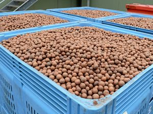 New program aims to deliver for Queensland macadamia growers