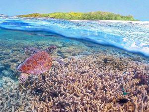Reef beats Bora Bora in list for top world destinations