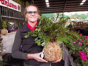 Queensland Garden Expo draws record crowd