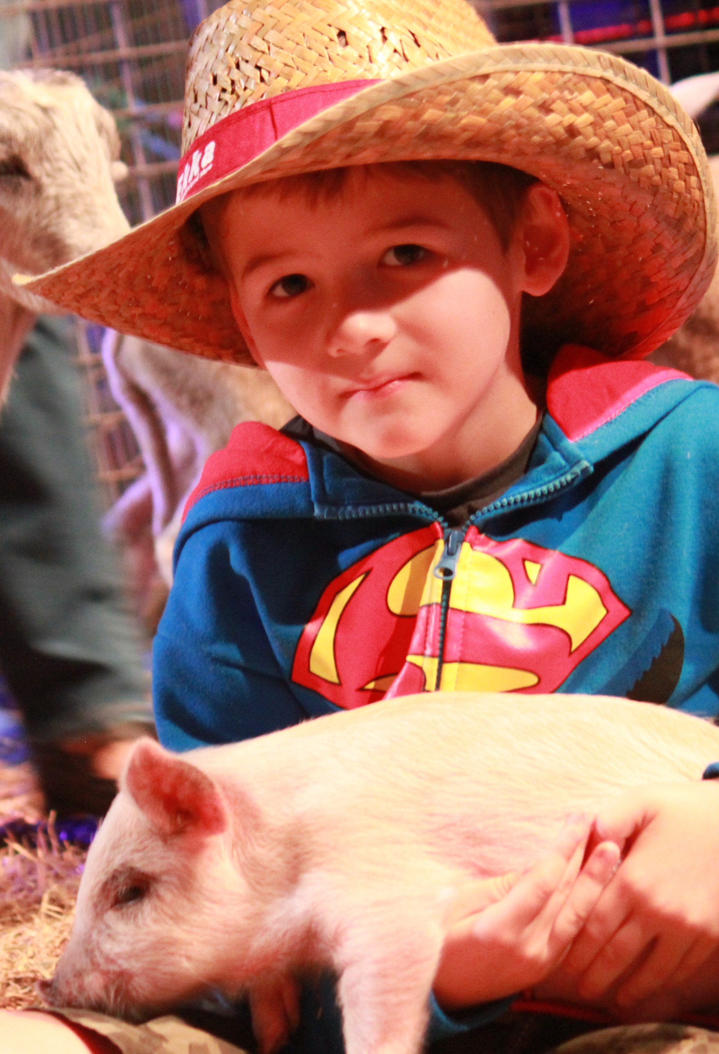 Thomas Ghidella meets a piglet at the Ekka media launch in Brisbane on July 12, 2016. The 139th Ekka will run from August 5 to 14.  Photo Sherele Moody / APN NewsDesk