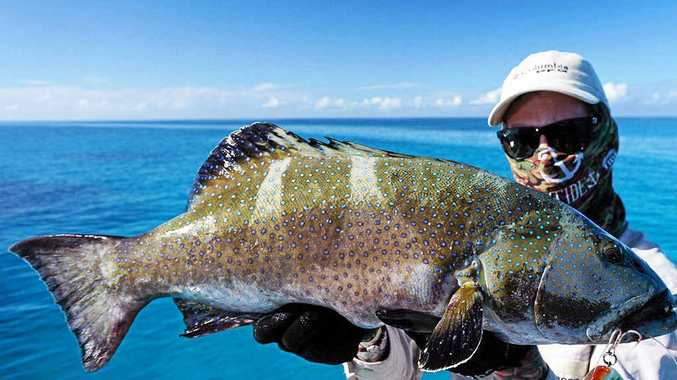 Bread and butter fish, anglers' target | Rockhampton Morning
