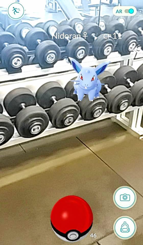 Nidoran in a 'proper pokemon gym' from Clint Yarrow  Photo: Contributed