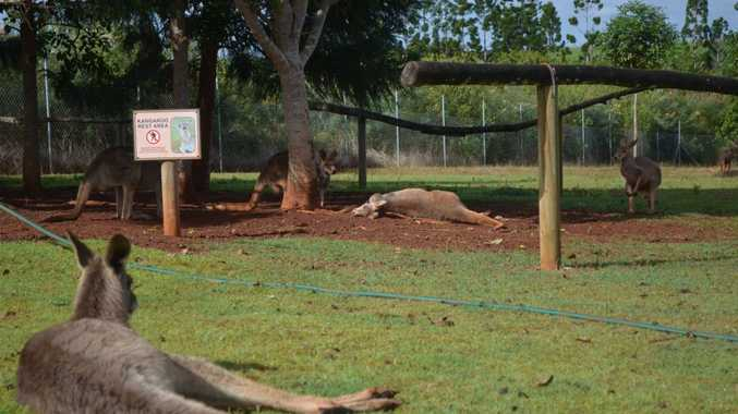 DEAD ROOS: Snakes Down Under staff devastated by the killing of 4 Kangaroos and 1 emu.