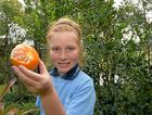 SURPRISE SIGHT: Kyla peels a mandarin from her home garden. The unusual amount of rain is being blamed for trees blossoming ahead of the spring calendar.