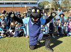 Elusive panther in Redbank Plains