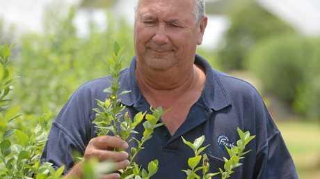 Bundaberg Fruit and Vegetable Growers chairman Allan Mahoney.