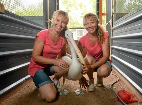 Paula and Bridgette Powers from the Twinnies Pelican and Seabird Rescue at home in Landsborough, doing what they love the most, caring for sea birds in need.
