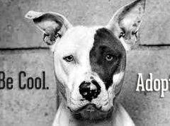 Birthday celebrations and pet adoption day