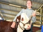 Caboolture State High School student Caterina Donnerly with Lotus the calf and William Steele.