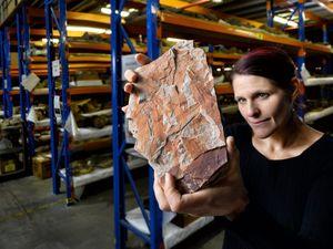 230mil yr old Ipswich fossil