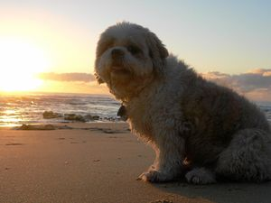 REVEALED: 13 beaches where dogs are allowed off leash