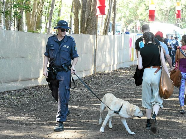 ABOVE: Splendour patrons walk past a drug detection dog at the festival entrance.