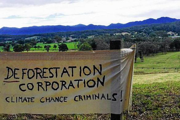 Protesters are opposed to the deforestation of Tarkeeth Forest, located near Bellingen.