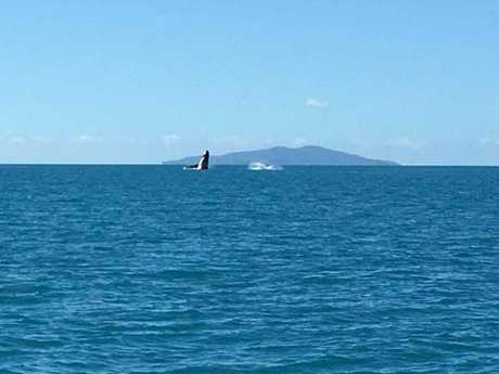 Whale sightings were all the rage over the weekend