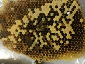 Threat of bee mite real for beekeepers