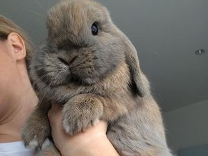 WATCH: Two fluffy bunnies dominating the internet