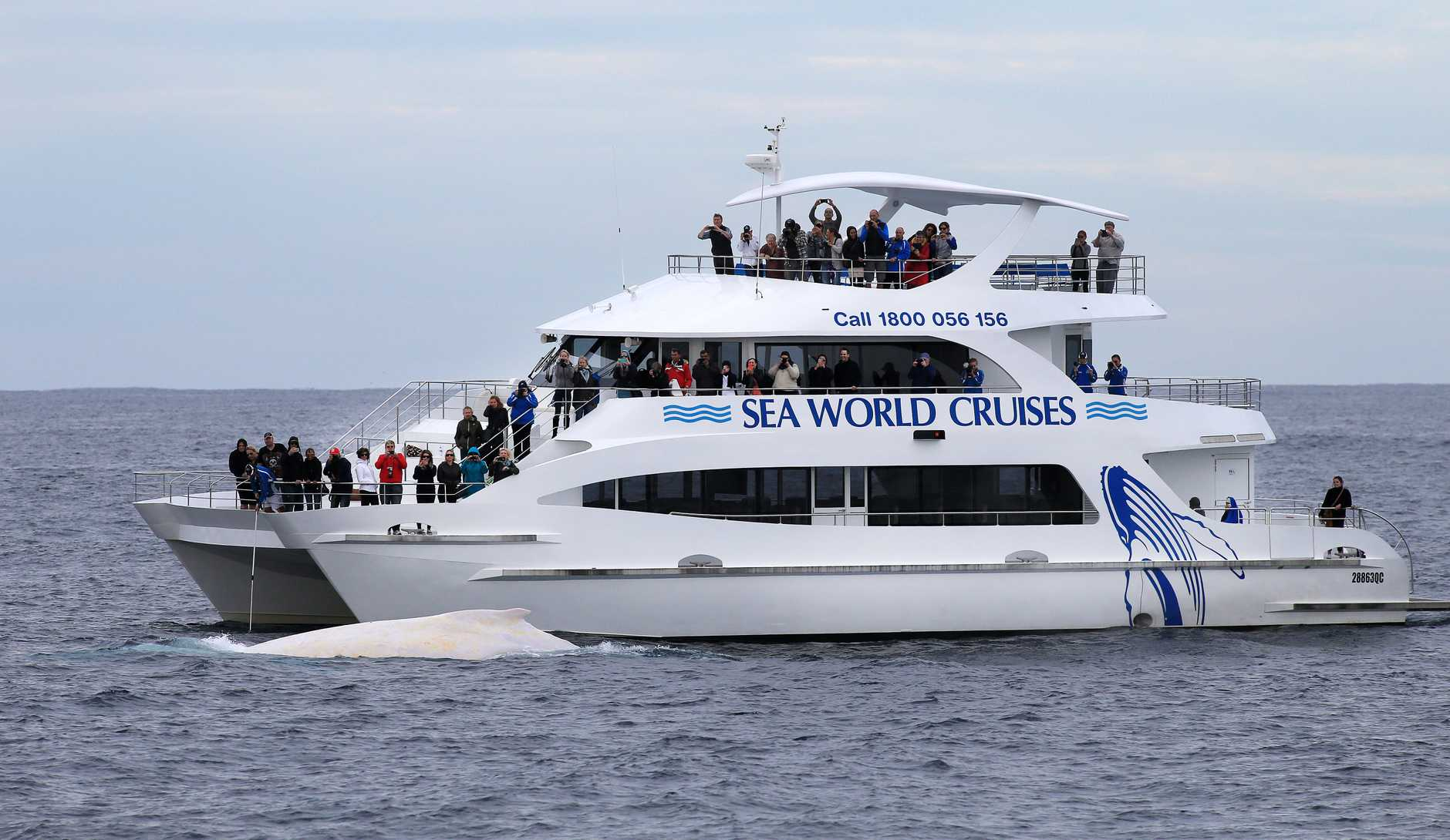 A Sea World Cruise charter vessel near Migaloo yesterday, off the Tweed Coast.