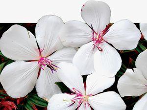 GREEN THUMB: Peaceful floral display