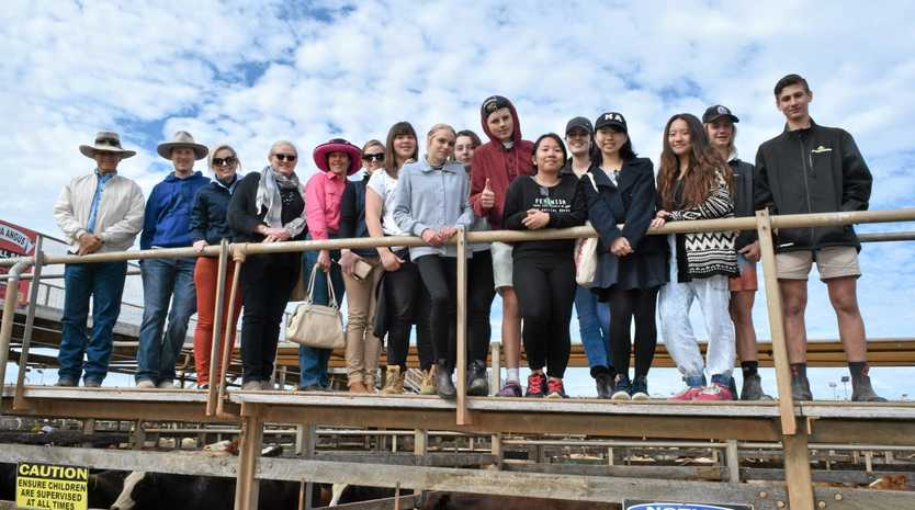 Corinda High School students visit the Roma Saleyards as part of the Rabobank Farm Experience Program.