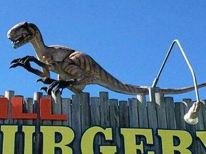 Raptor on the run after stolen from vet surgery