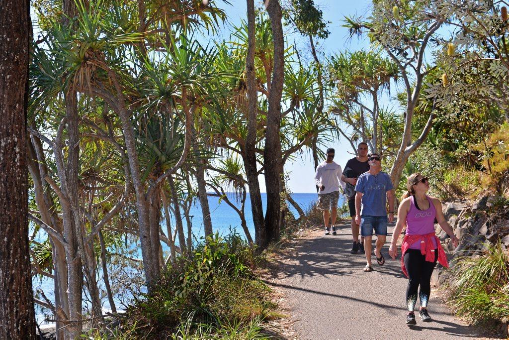 Good Morning Noosa: Walking in Noosa National Park looking for Koalas. Photo: John McCutcheon / Sunshine Coast Daily