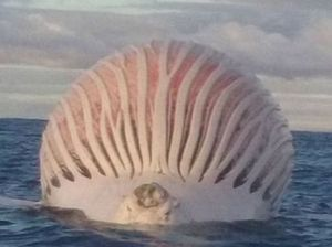Boaties stumble on alien-like distorted carcass
