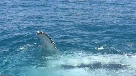 Sarina Police had a close encounter with a whale.