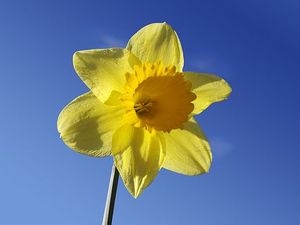St Vincent's celebrates Daffodil Day with breakfast