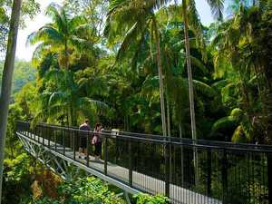 TRAVEL: Take a skywalk through the Tamborine Rainforest