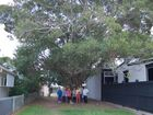 'Shocked': Anger with move to chop 'iconic' Tannum tree threatening house
