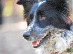 Central Coast Council backs pet desexing initiative