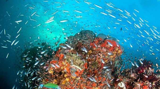 A school of bait fish.