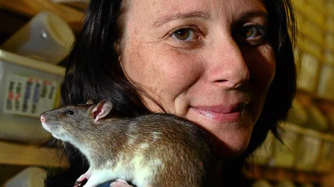Stacey Keady with one of the rats that she breeds.