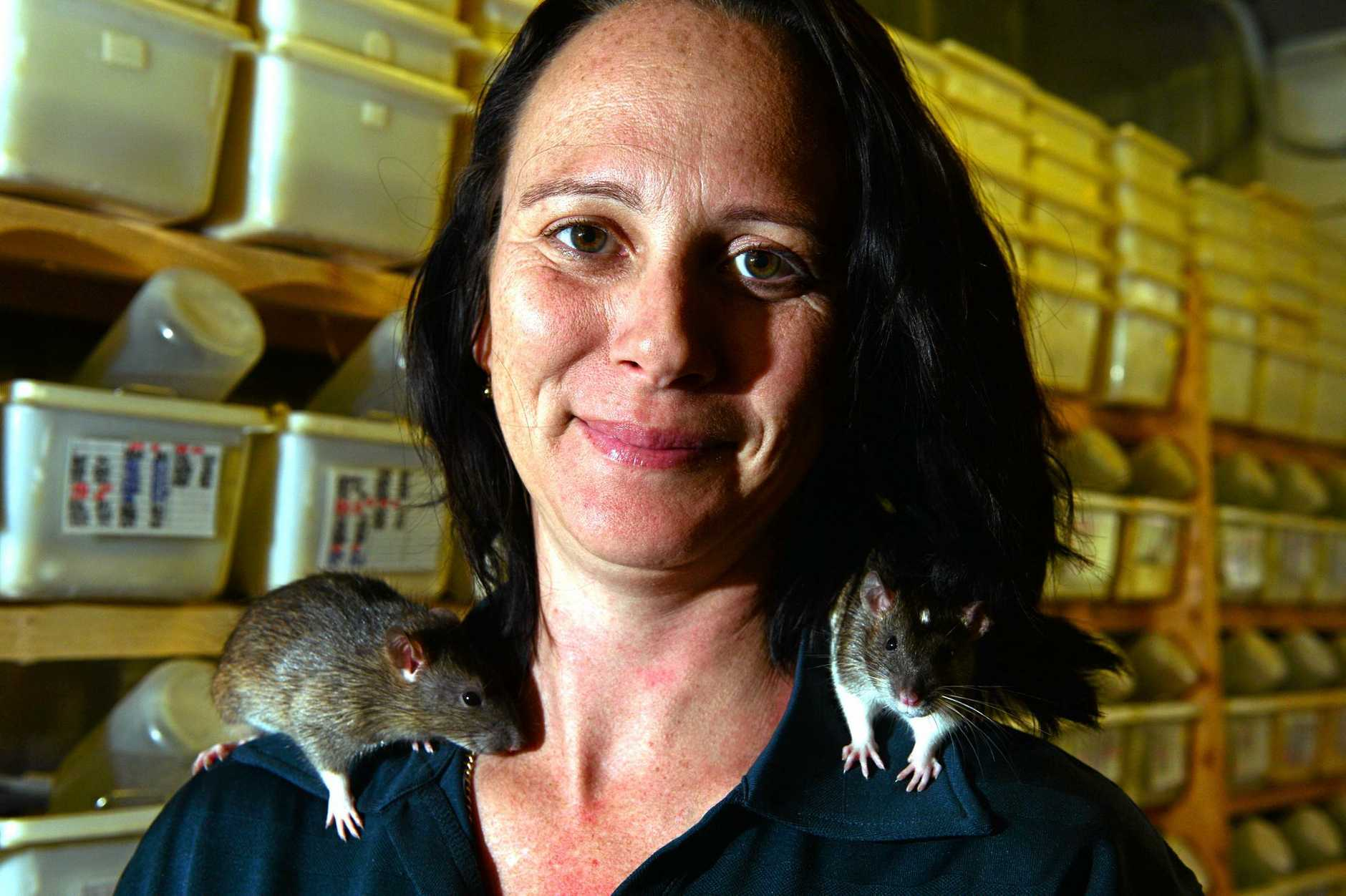 Stacey Keady with some rats that she breeds.  Photo: John McCutcheon / Sunshine Coast Daily