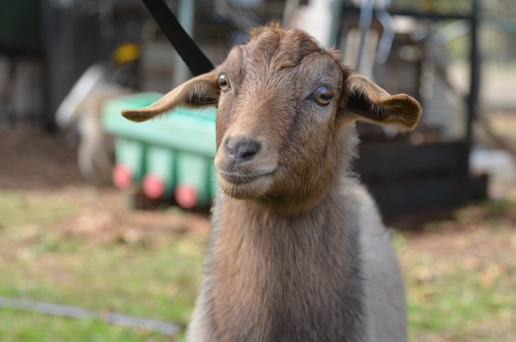 A truck driver has been sentenced for aggravated animal cruelty after his pet goat was found dead at the back of his yard.