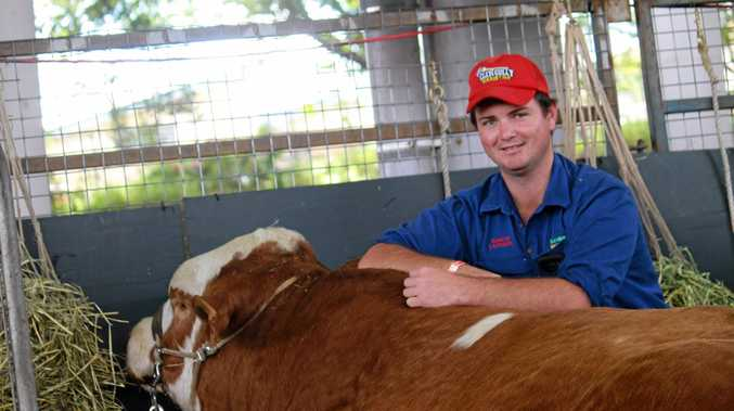 Ipswich bull breeder Gareth Laycock at the 2016 Ekka. He hopes this bull will fetch more than $6000 at the Rockhampton beef cattle sale on August 29.