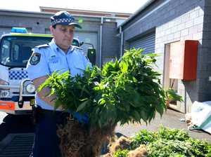 Drugs seized Tabulam