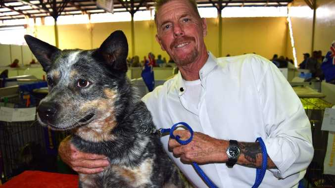 Ipswich man Wayne Carter breeds and trains Australian cattle dogs and is pictured with four-year-old Chase.Photo Pamela Frost