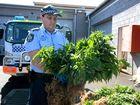 Drugs found growing in caravan at Tabulam