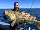 WHOPPER: Luke McCombe caught several good quality fish including this big cod on local reefs off Mooloolaba.