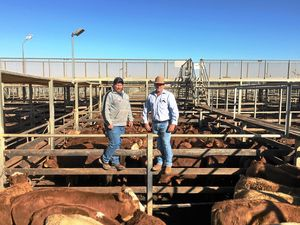 Records smashed as carcase weights hit more than 709c/kg